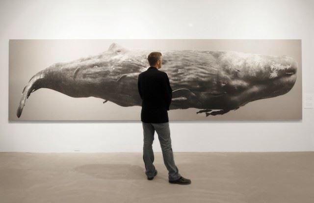 bryantaustinbeautifulwhale1