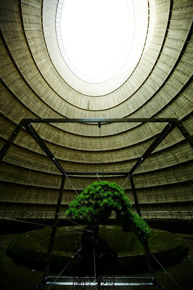 shiki-bonsai-power-station-belgium-IM-4