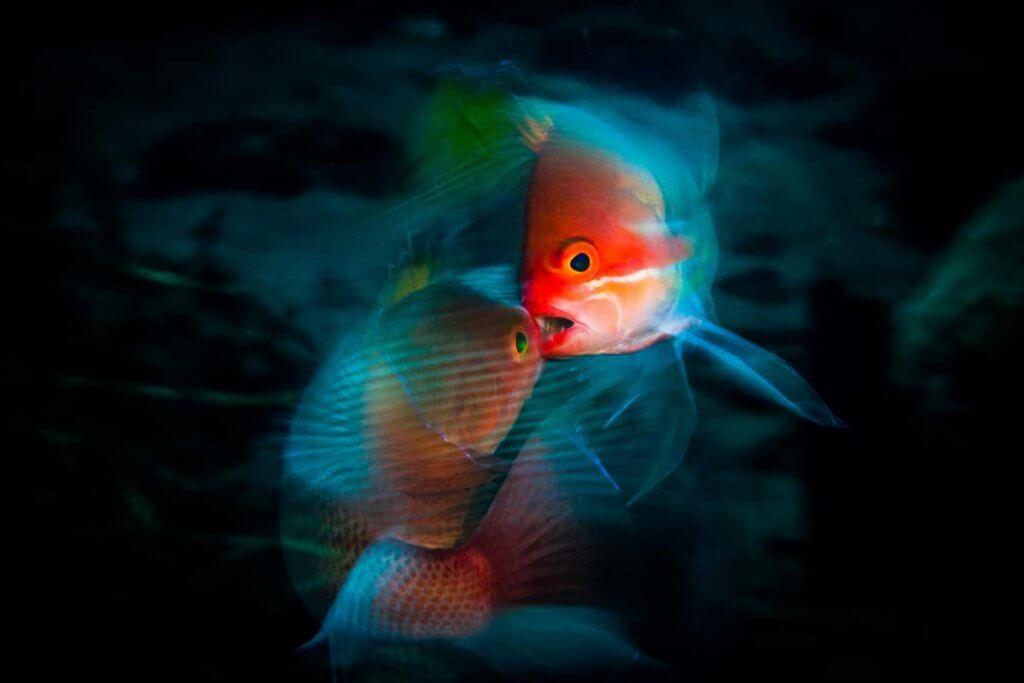 海洋深海攝影展