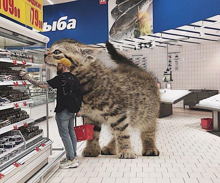貓,動物攝影,後製,俄羅斯,戰鬥民族,藝術,城市美學新態度